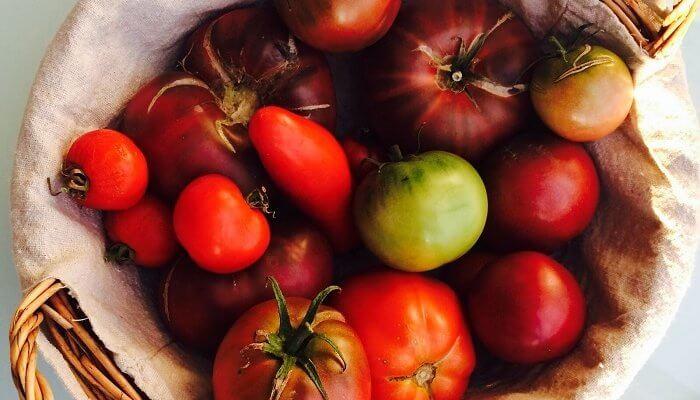 Vives les bonnes tomates